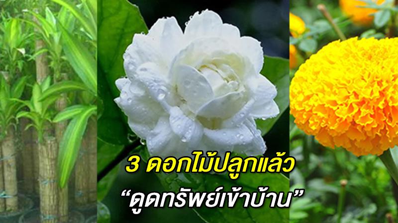 3 ดอกไม้ปลูกแล้ว ''ดูดทรัพย์เข้าบ้าน'' ชีวิตมีแต่เฮง